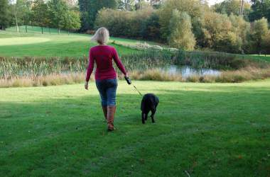 dog friendly hotels in hertfordshire